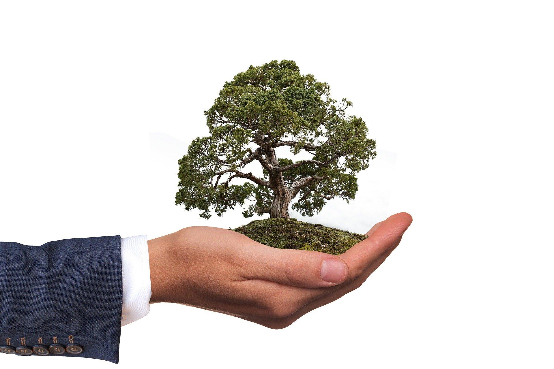 Como fazer a minha empresa se comprometer com o meio ambiente
